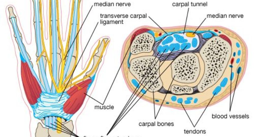 What Is Carpal Tunnel Syndrome Dr Brian Cable Md Dr Brian Cable Md